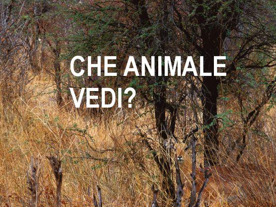 che animale vedi? Attenzione selettiva