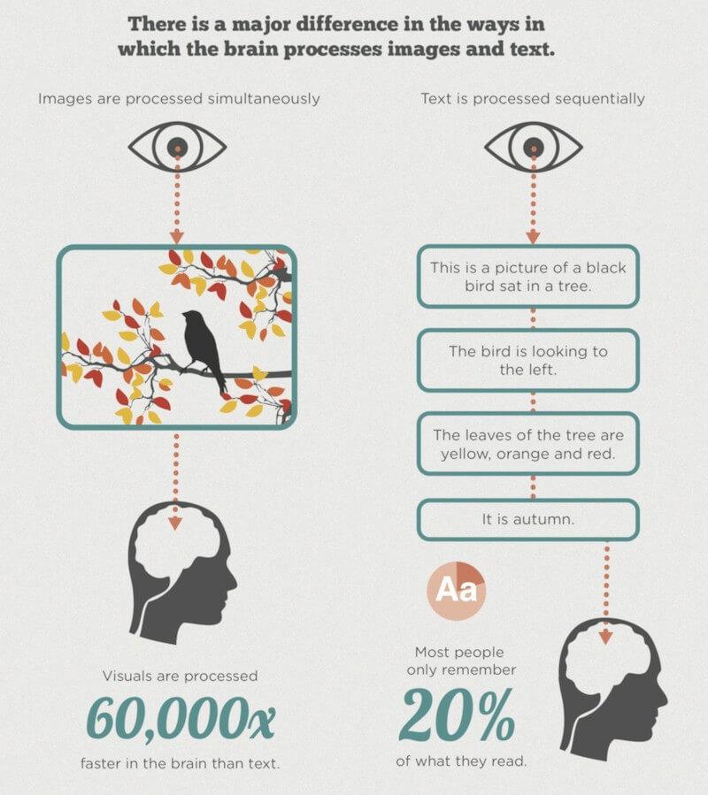 differenza cervello immagine e testo